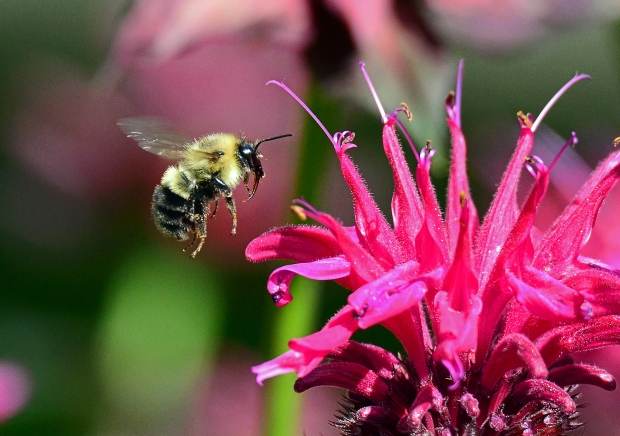 bees where have they gone Where have all the insects gone by  if you talk to people, they have a gut  scientists have tracked alarming declines in domesticated honey bees,.