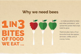 Where have all the bees gone? #BringBackTheBees