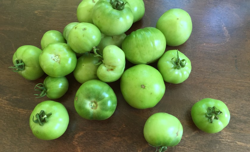 What to do with my green tomatoes?